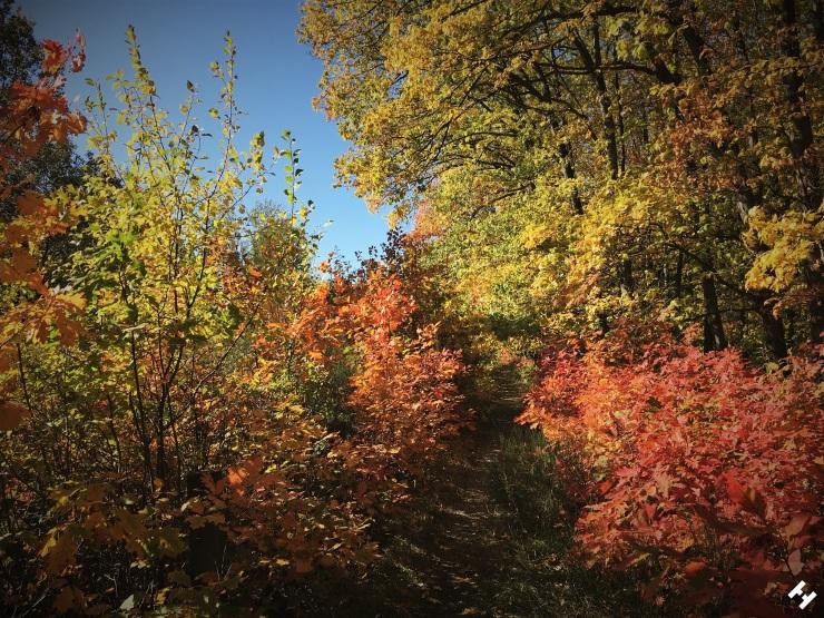 Weg an der Werdauer Waldeisenbahn