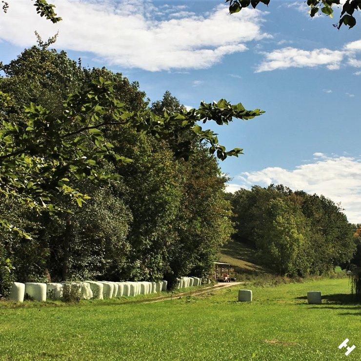 Trail von den Gablenzer Teichen Richtung Lauenhain