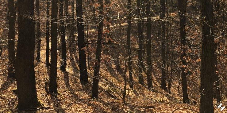 Trail von Blankenhain zur Koberbach Talsperre