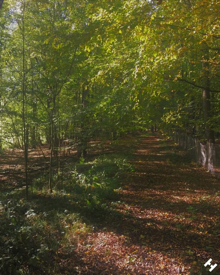 Grün-gelbe Blätter umranden den mit Laub bedeckten Waldweg